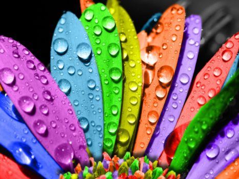 rainbow-flowers-wallpapers