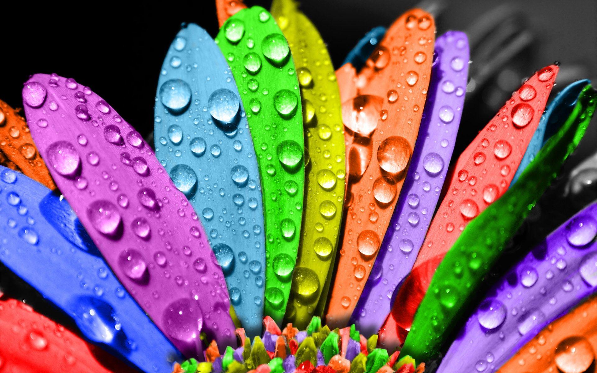 rainbow-flowers-wallpapers