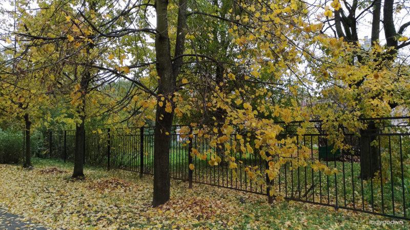 Осень в Петербурге. Фото.