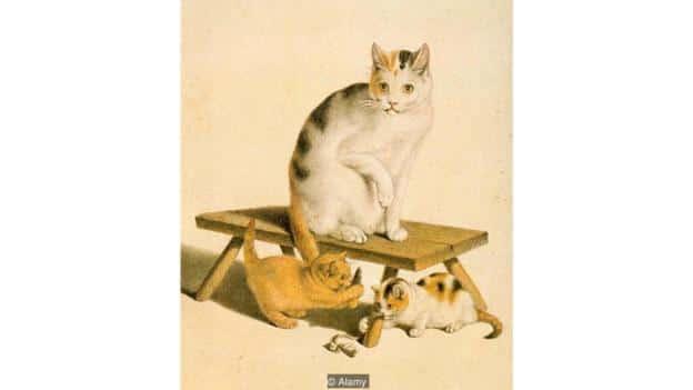 Готтфрид Майнд, художник- савант. (Фото: Alamy). - Саванты