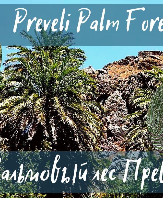 Пальмовый лес Превели